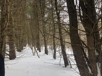 NY hunting land for sale in Southern Tier NY
