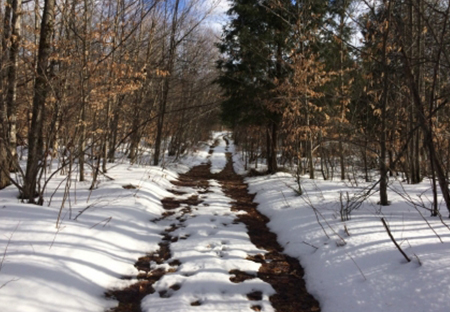 ny hunting land for sale at finnegan pond from land and camps