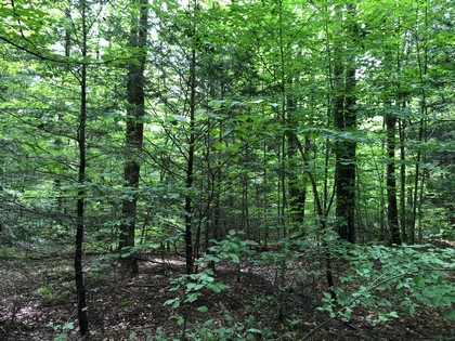 hunting land for sale in hardford ny near kennedy state forest from land and camps