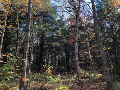 NY land and camp package for sale - Williamstown NY